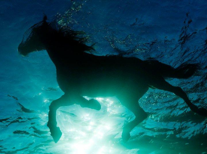 cavalo nadando no mar em Malta