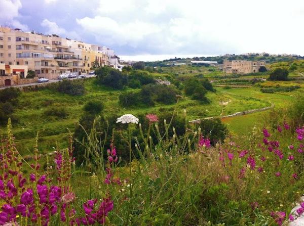 campos floridos em Malta